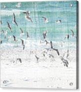 Sandestin Seagulls E Acrylic Print