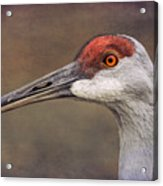 Sandhill Crane Portrait Acrylic Print