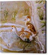 Sandhill Cranes Chicks First Bath Acrylic Print