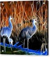 Sandhill Cranes Pair Fractal Acrylic Print