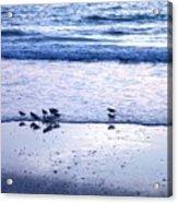 Sandpiper Beach I Acrylic Print