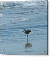 Sandpiper On The Beach Acrylic Print