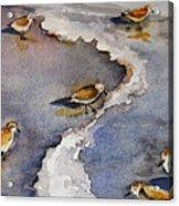 Sandpiper Seashore Acrylic Print