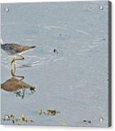 Sandpiper's Mirror Acrylic Print