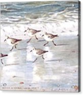 Sandpipers On Siesta Key Acrylic Print by Shawn McLoughlin