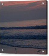 Sandpipers On The Beach Acrylic Print