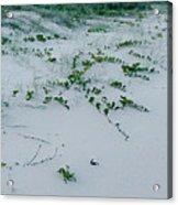 Sandscape Vines Acrylic Print
