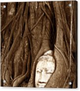 Sandstone Buddha Head Overgrown By Banyan Tree Thailand Acrylic Print