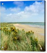 Sandunes At Fethard, Co Wexford, Ireland Acrylic Print