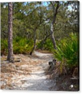 Sandy Path In Hunting Island South Carolina Acrylic Print