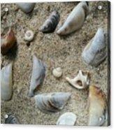 Sandy Seashells Acrylic Print