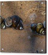 Sandy Shells Acrylic Print