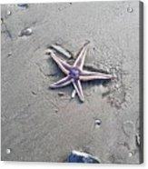 Sandy Star Acrylic Print