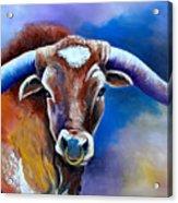 Sandy's Longhorn Bull Acrylic Print
