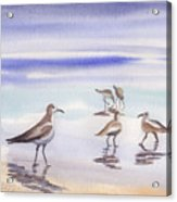Sanibel Beach And Birds Acrylic Print
