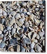 Sanibel Island Seashells I Acrylic Print