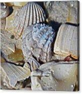 Sanibel Island Seashells Iv Acrylic Print