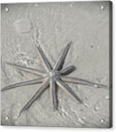 Sanibel Starfish Acrylic Print