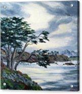 Santa Cruz Cypress Tree Acrylic Print