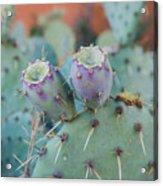 Santa Fe Prickly Pear Cactus Acrylic Print