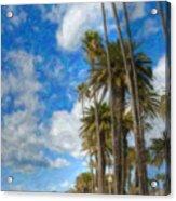 Santa Monica Ca Palisades Park Bluffs Palm Trees Acrylic Print
