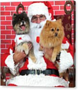 Santa Paws With Two Dogs Acrylic Print