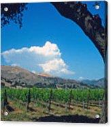 Santa Ynez Vineyard View Acrylic Print by Kathy Yates