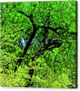 Sapes In Nature Acrylic Print