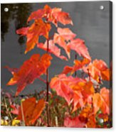 Sapling By The Pond Acrylic Print