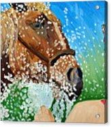 Sara Washes Her Horse Acrylic Print
