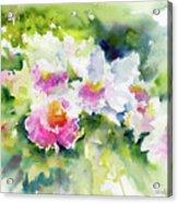 Sarasota Orchids Acrylic Print