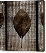 Sassafras Leaves With Wicker Acrylic Print