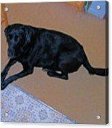 Sassy Looking Blue Acrylic Print