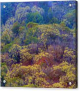 Saturated Forest Acrylic Print