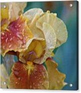 Saturated Iris Acrylic Print