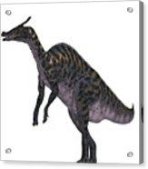 Saurolophus Dinosaur On White Acrylic Print