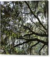 Savannah Green Leaves Acrylic Print