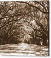 Savannah Sepia - Glorious Oaks Acrylic Print
