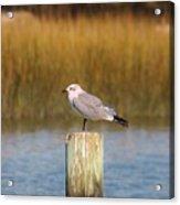Savannah Shore Bird Acrylic Print