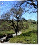 Save The Oaks Acrylic Print