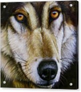 Save The Wolf Acrylic Print