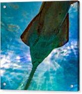 Sawfish Acrylic Print