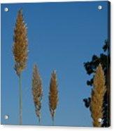 Sawgrass Blooms Acrylic Print