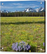 Sawtooths And Wildflowers Acrylic Print