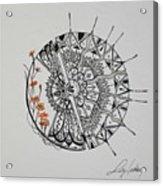 Saxifraga 'peter Pan' Acrylic Print