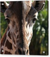 Say Cheese Card Acrylic Print