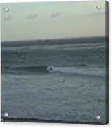 Sb Ocean Life Acrylic Print