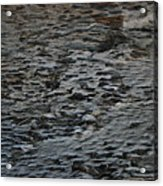 Scaley Log Acrylic Print