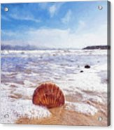 Scallop Shell On The Beach - Impressions Acrylic Print
