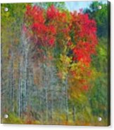 Scarlet Autumn Burst Acrylic Print